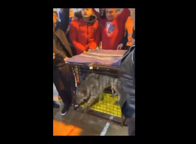 Ulcinj: Na fudbalski turnir donijeli vuka!