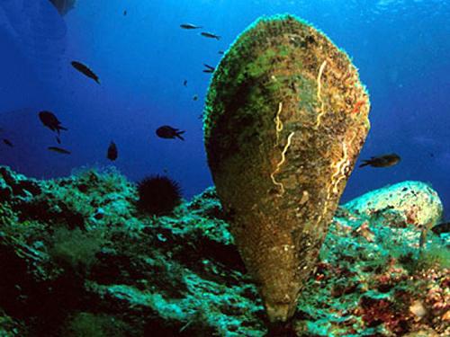 Izumire najveća i najljepša školjka našeg mora, razlog - parazit