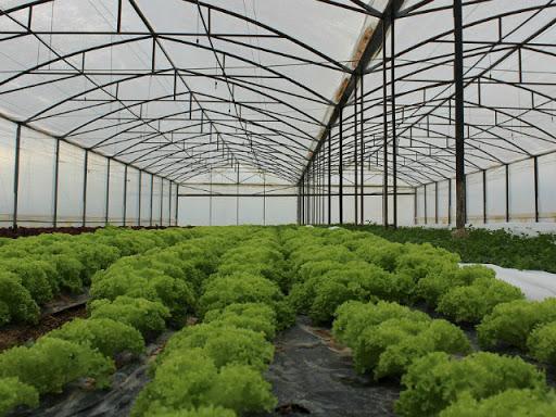 Nastavlja se bespovratna podrška proizvođačima povrća