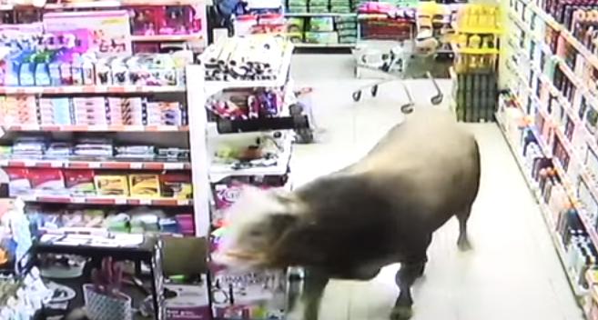 Nesvakidašnji prizor: Bik od 750 kg napravio haos u tržnom centru