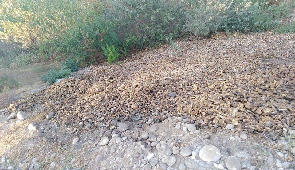Radusinović: Na obali Morače ipak pronađene noge od kokošaka