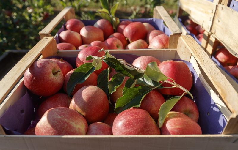 Trik koji otkriva je li jabuka svježa ili je bila zamrznuta