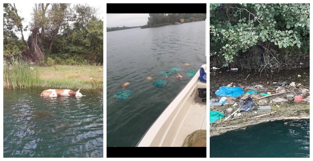 Ministarstvo: Uginule životinje koje i dalje plutaju po Bojani došle iz Albanije
