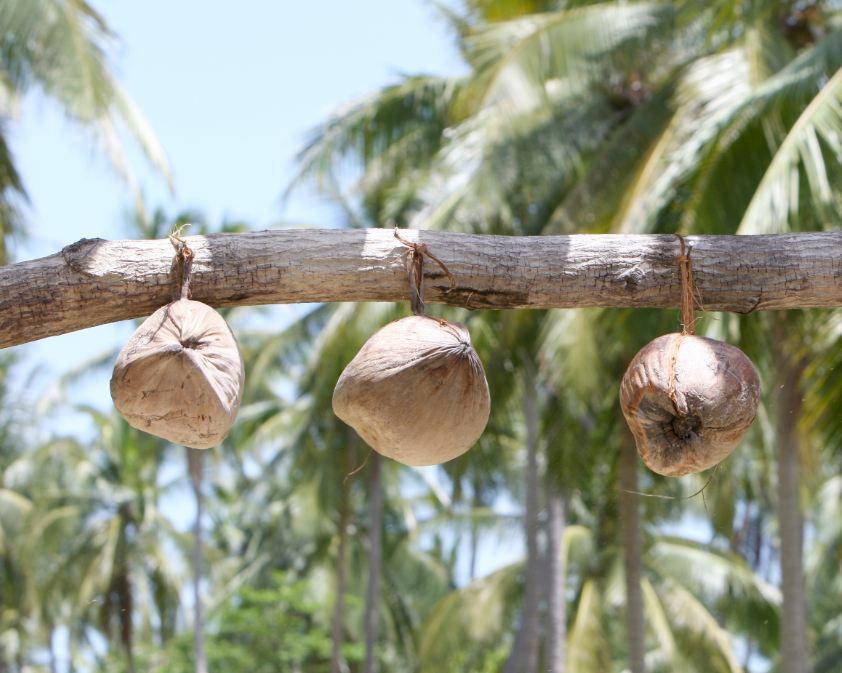 Ljekovitost kokosovog ulja