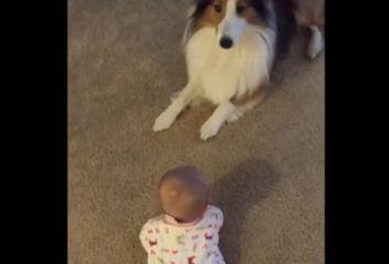 Pas bebu naučio preslatku stvar, majka snimila taj trenutak