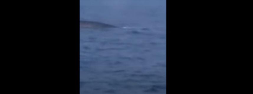 Pogledajte: Kit perajar u crnogroskom moru