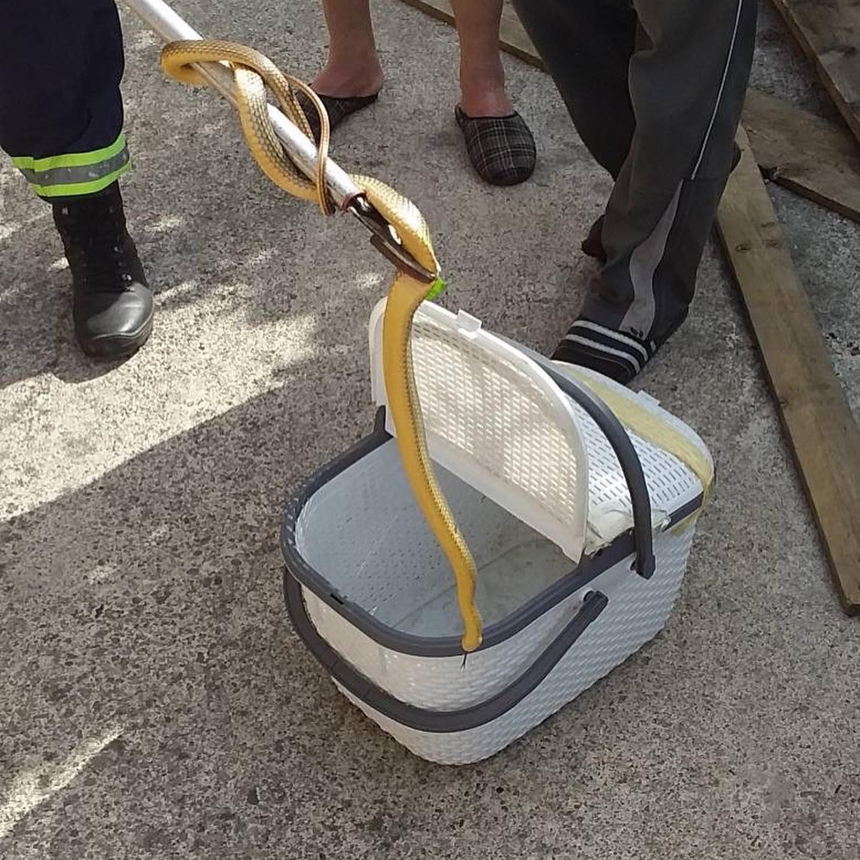 Zabjelo: Vatrogasci uklonili zmiju iz kuće