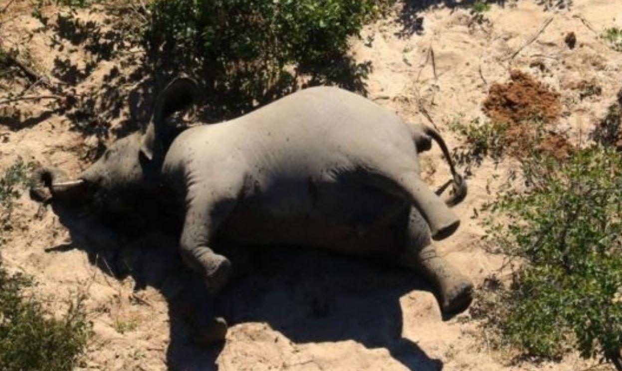 Niko ne zna šta se događa, naučnici u strahu: Stotine slonova umrlo u Africi