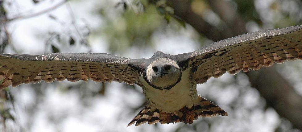 """""""Ovo je jezivo"""": Od fotografija najvećeg orla na svijetu ledi se krv u žilama"""
