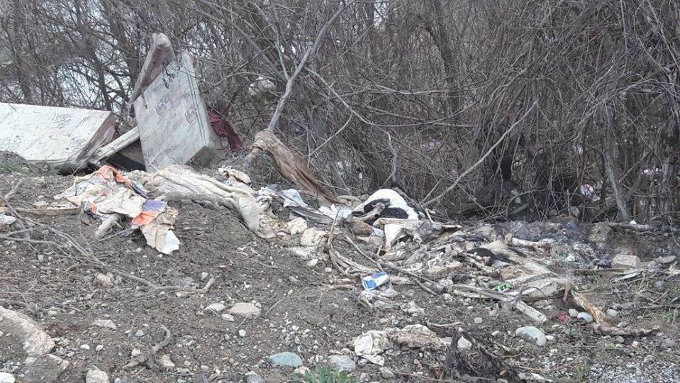 Mrtve životinje na putu Berane - Bijelo Polje
