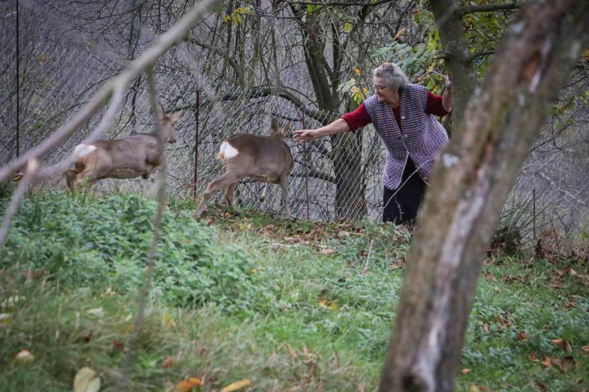 Nevjerovatna ljubav srna i starice