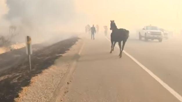 Spasili konja od požara, on se vratio da pomogne ostalima