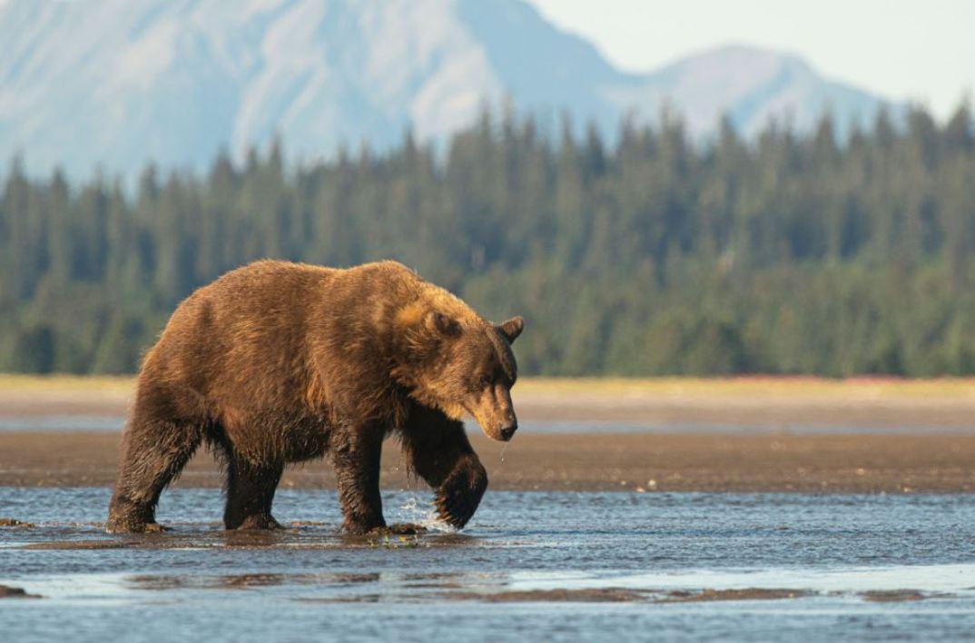 Bizarno: Avion ubio - medvjeda