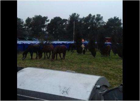 Podgorica: Krdo divljih konja smješteno u karantin