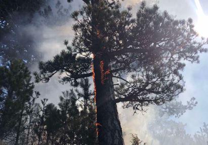 Žabljak: Požar se širi prema kanjonu Tare i prijeti Nacionalnom parku