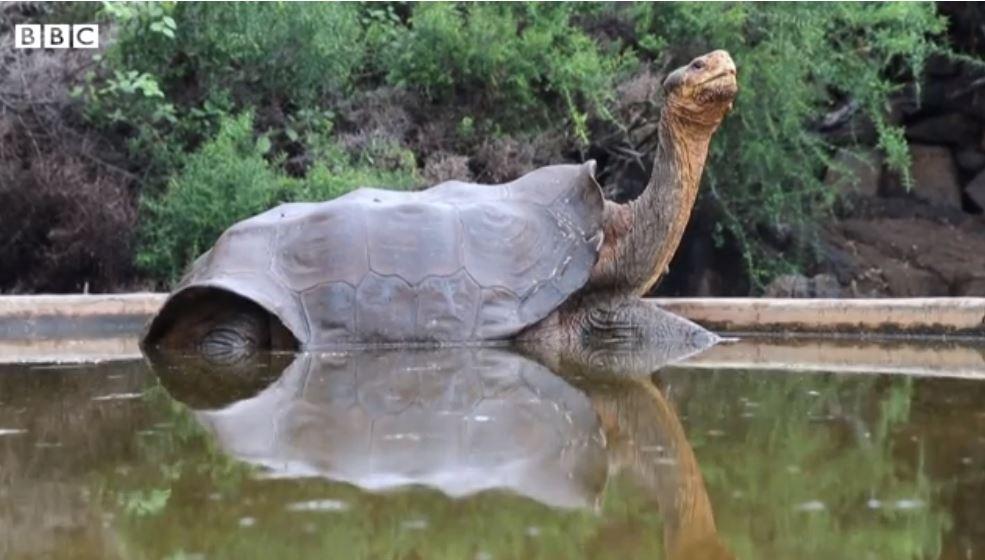 Dijego – kornjača koja je spasila vrstu