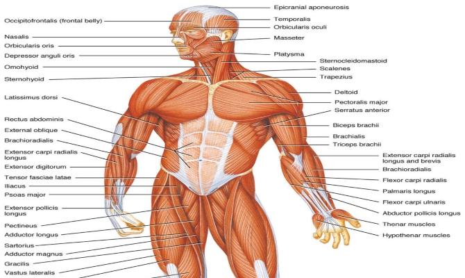 Fascinantne činjenice o ljudskom tijelu