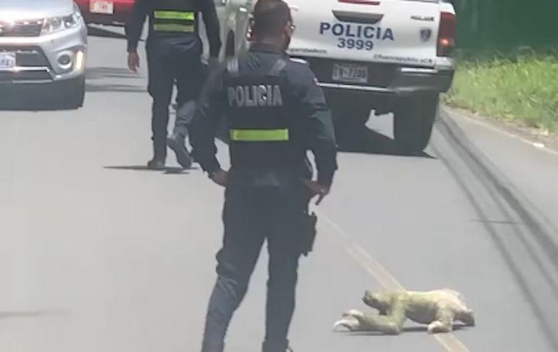 Video: Policija blokirala saobraćaj kako bi ljenivac mogao preći put