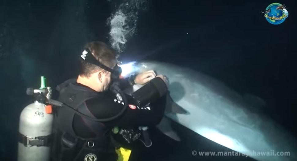 Kakav video! Ranjeni delfin prišao roniocu i zatražio pomoć