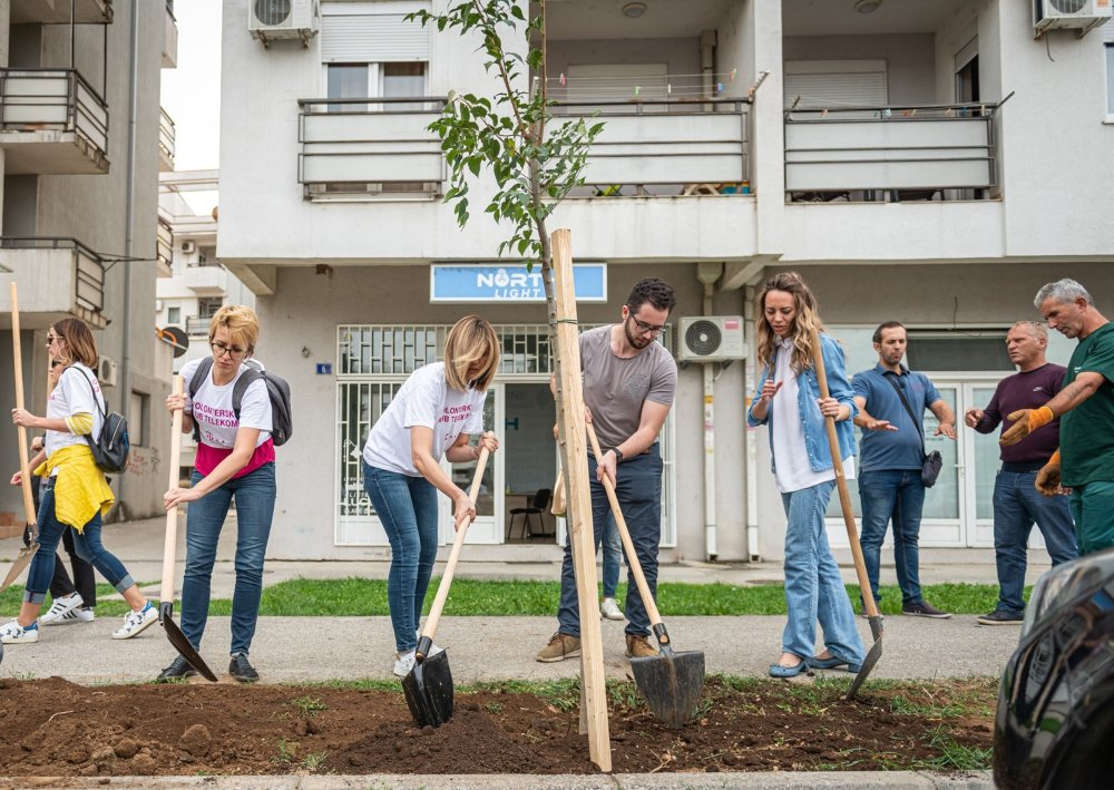 U Bloku 9 zasađeno 20 stabala košćele