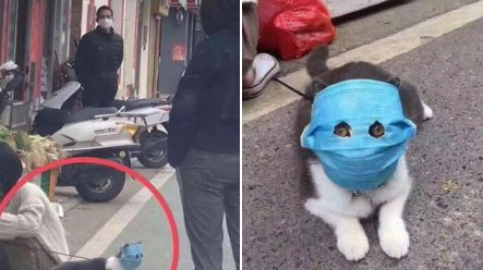 Prodaja maski za kućne ljubimce u Kini 10 puta veća