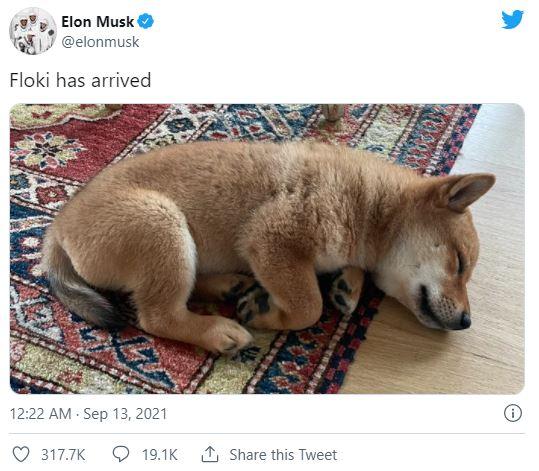 Vrijednost kriptovalute nevjerovatno skočila... zbog psa